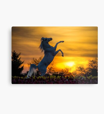 A Steed fit for a Queen.. Metal Print