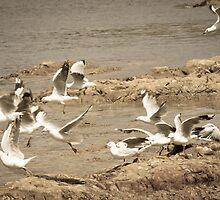 Seagulls by Anne Scantlebury