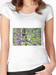 Eastern Bluebird Women's Fitted Scoop T-Shirt