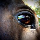 Eye of The Horse by Sharna Wood