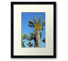 Tall palm trees against the blue sky. Framed Print
