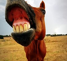 Red the smiling horse by Sharna Wood