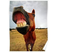 Red the smiling horse Poster