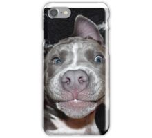 Silly, Baby, Blue Pit Bull Puppy Dog  iPhone Case/Skin
