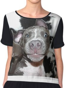 Silly, Baby, Blue Pit Bull Puppy Dog  Chiffon Top