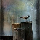 Mr Seagull by Russell Fry