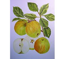James Grieve Apple Photographic Print