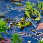 First Frog of Spring by TJ Baccari Photography