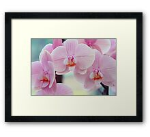 Beauty of Pink Phalaenopsis Orchids Framed Print