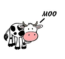 Moo Cow Photographic Print