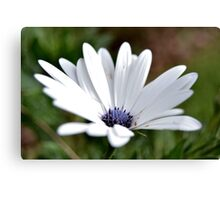 White simplicity Canvas Print
