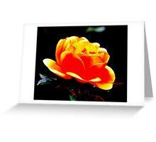 Summertime Rose Greeting Card