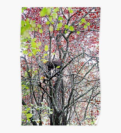 Bird Nest in the Tree Poster
