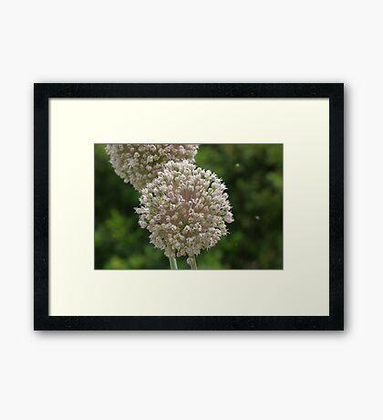 Flowers Photo Framed Print