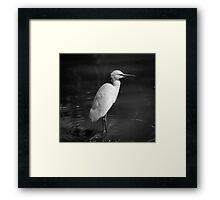 The patient Egret Framed Print