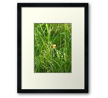 Pretty Pearl Crescent Butterfly Framed Print
