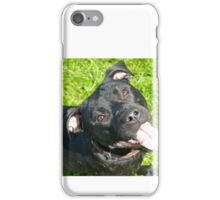 staffy x iPhone Case/Skin