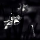 Narcis by Lenoirrr