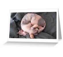 Mom tortie sphynx cat Greeting Card