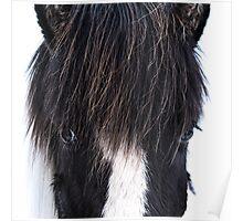 Icelandic Horse V.1 Poster