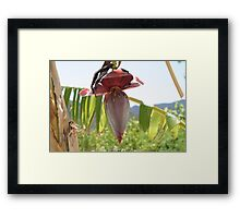 Flower Photography Framed Print
