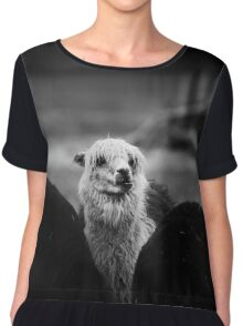 alpaca, lama Chiffon Top