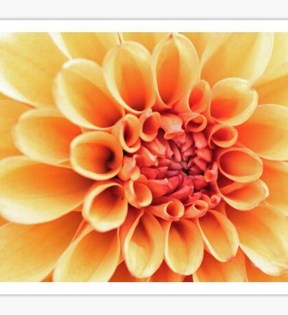 Flower taken at Mount Stewart Sticker