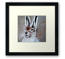 Winter Hare Framed Print