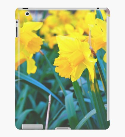 Spring Time Daffodils iPad Case/Skin