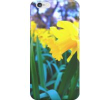 Spring Time Daffodils 2 iPhone Case/Skin