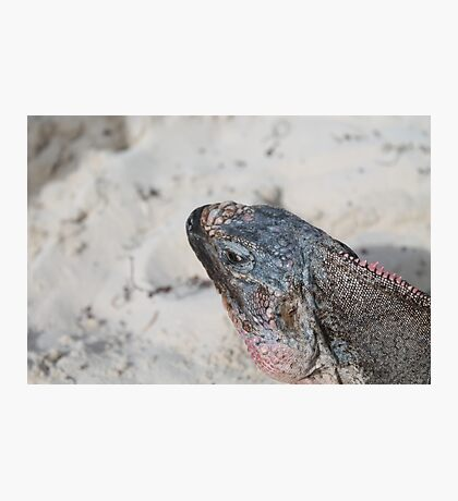 Bahamian Rock Iguana Photographic Print
