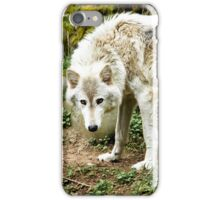 White Wolf  iPhone Case/Skin