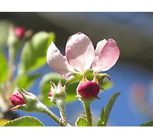Blooming Buds Photographic Print