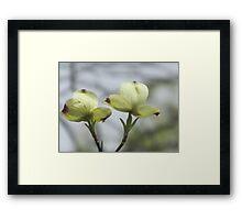 Blooming DogWood Tree Framed Print