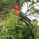 King Parrot by Flo Wetherley