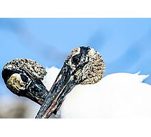 Pair of Courting Wood Storks Photographic Print