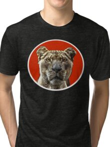 Lioness Portrait with red and white mount Tri-blend T-Shirt