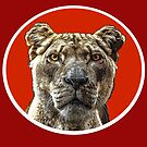 Lioness Portrait with red and white mount by Mary Taylor