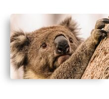 Koala 3 Canvas Print