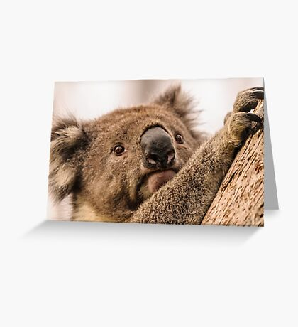 Koala 3 Greeting Card