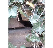 The Urban Hiding Place Photographic Print