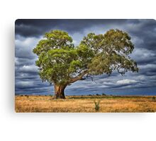 My favorite tree - Anakie Canvas Print