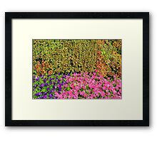 Natural background with many colorful plants. Framed Print