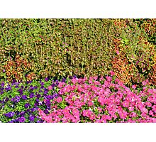 Natural background with many colorful plants. Photographic Print