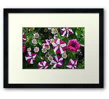 Flowers with white and purple colors. Framed Print