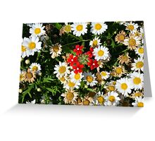 Beautiful white flowers pattern, with small red flowers in the center. Greeting Card