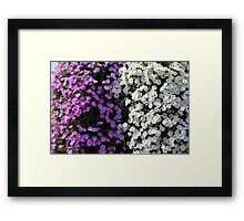 White and purple flowers, natural background. Framed Print