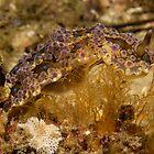 Dendrodoris denisoni, Australia by Erik Schlogl