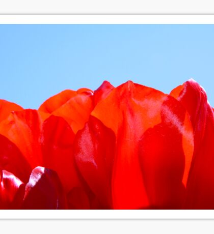 Red Petal Sun Sticker