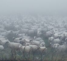 Flock of sheep covered in fog Sticker